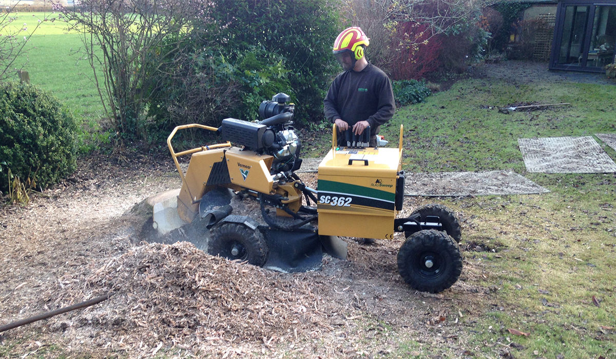 Stump grinding of mature tree root bowl in Cardiff