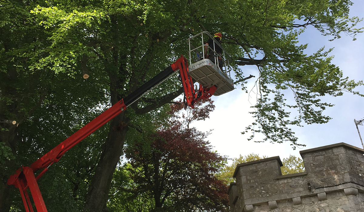 Felling an overhanging tree at Ewenny Priory, Vale of Glamorgan
